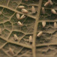 La plaga: l-infestazione da farfalle bianche in una scena del film