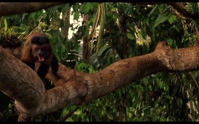 Trailer - Amazonia