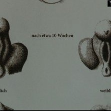Vulva 3.0: un'immagine del documentario 'ginecologico'