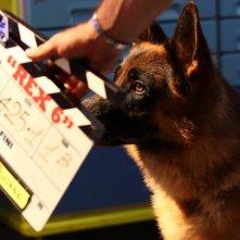 Rex 6: il cane protagonista durante le riprese della fiction