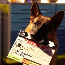 Rex 6: il cane protagonista sul set della fiction