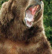 Una foto di Bart the Bear