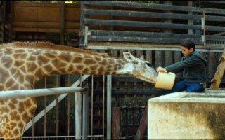 Giraffada: Ahmed Bayatra in una scena del film con la sua amica giraffa