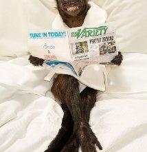 Una foto di Crystal the Monkey