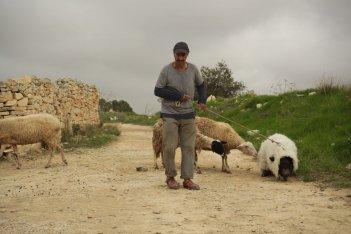 Un insolito naufrago nell'inquieto mare d'Oriente: Sasson Gabai col maialino travestito da pecora in una scena