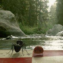 MINUSCULE - La valle delle formiche perdute: una scena sul film animato incentrato su una lotta tra tribù di formiche