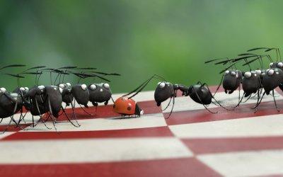 Minuscule, le formiche francesi che hanno rischiato di vincere l'Oscar