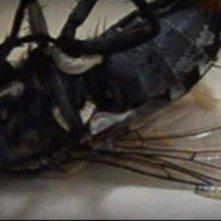 Un'inquietante immagine del film P.O.E. - Pieces of Eldritch