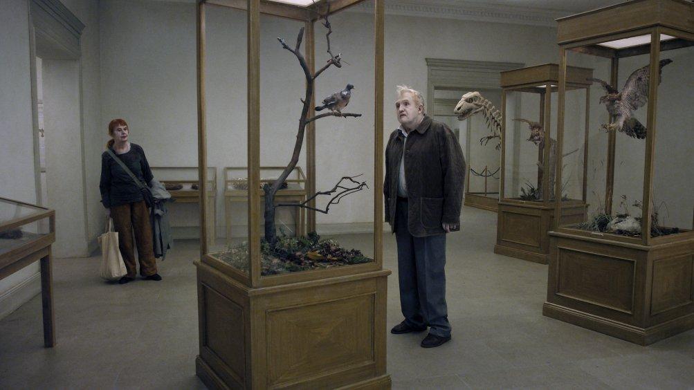 Un piccione seduto su un ramo riflette sull'esistenza: una scena del film