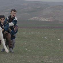 Sivas: Doğan İzci in una scena del film con il suo cane Sivas