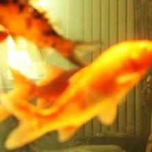 Una scena del film Red Amnesia