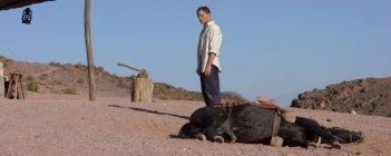 Loin des hommes: Viggo Mortensen in una scena del film