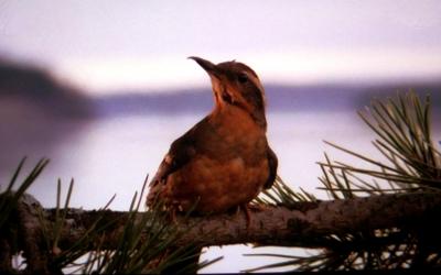 Twin Peaks: venticinque anni dopo ecco tutto il materiale inedito