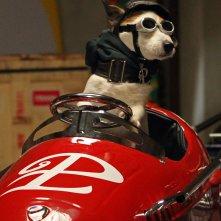 Pongo il cane milionario: il simpatico e ricco cagnolino Pongo in una scena