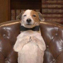 Pongo il cane milionario: il simpatico cagnolino in una scena