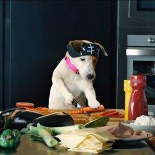 Pongo il cane milionario: Pongo si diletta in cucina in una scena del film