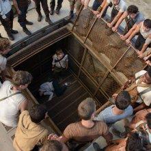 Maze Runner - Il labirinto: una scena tratta dal film fantascientifico
