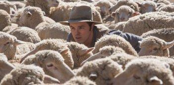 Un milione di modi per morire nel West: Seth MacFarlane tra le pecore in una scena del film