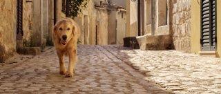 Italo: il cane Italo a passeggio per le vie di Scicli in una scena