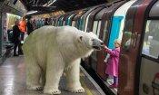 Da Fortitude a Londra: un orso bianco in giro per la City