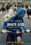 Locandina italiana di White God - Sinfonia per Hagen