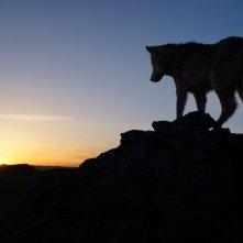 L'ultimo lupo: una scena del film