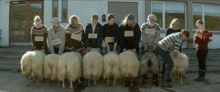 Rams - Storia di due fratelli e otto pecore: una sequenza del film di Grímur Hákonarson