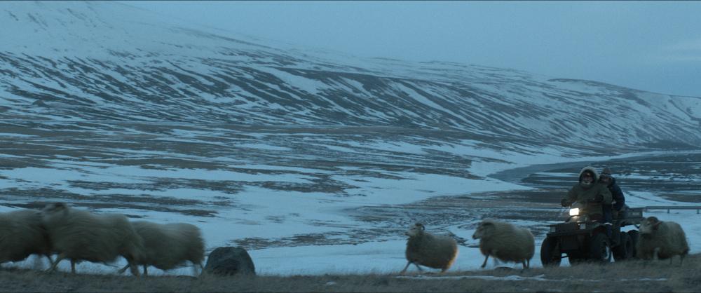 Rams - Storia di due fratelli e otto pecore: una suggestiva immagine del film di Grímur Hákonarson