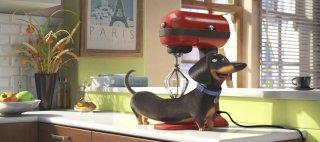 Pets - Vita da animali: un bassotto in una scena del film