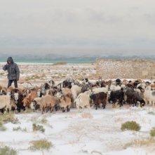 I sogni del lago salato: una scena di pastorizia