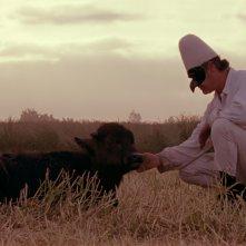 Bella e perduta: Pulcinella/Sergio Vitolo insieme al bufalo