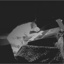 Heart of a Dog: un'immagine del film sperimentale di Laurie Anderson