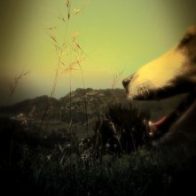Heart of a Dog: un'immagine del film di Laurie Anderson pubblicata sul sito del New York Film Festival