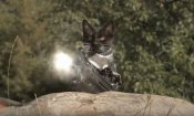 Z Nation: 'gatti vs zombie' nel nuovo teaser!