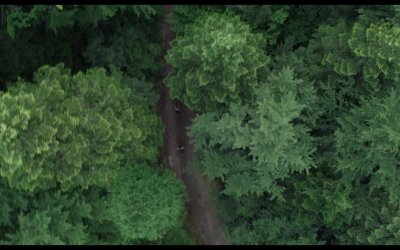 Trailer - The Forest