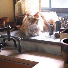 Hunger Games: Il Canto della Rivolta - Parte 2: il gatto di Prim in una foto del film