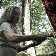 Amama - When a Tree Falls: un'immagine tratta dal film