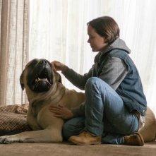 Freeheld - Amore, giustizia, uguaglianza: Ellen Page in una scena del film