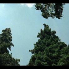 Kommunisten: un'immagine tratta dal film