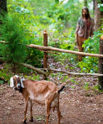The Walking Dead: la capretta Tabitha nell'episodio Qui non è qui