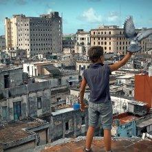Condotta: Armando Valdes Freire con in mano un piccione pronto a spiccare il volo