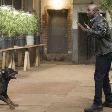 Jessica Jones: l'attore Mike Colter interpreta Luke Cage