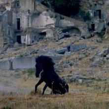 Montedoro: una scena del film con un cavallo