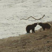 La terra degli orsi: un'immagine tratta dal documentario