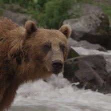 La terra degli orsi: un momento del documentario