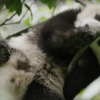 Born in China: il trailer per celebrare la Giornata della Terra