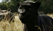 Box Office USA: Disney continua a ruggire con Il libro della giungla