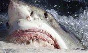 Meg, lo squalo preistorico sfiderà Predator... al botteghino