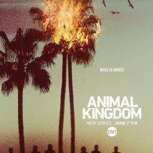 Animal Kingdom: la locandina della serie