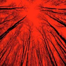 The Woods: una nuova locandina
